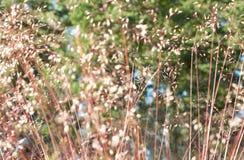 Abstracte aardachtergrond - droge kruiden op weide in een zonnige de zomerdag Royalty-vrije Stock Foto