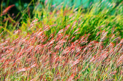 Abstracte aardachtergrond met gras Royalty-vrije Stock Fotografie