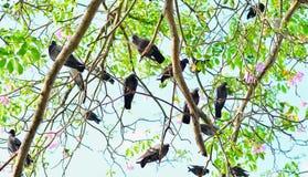 Abstracte aardachtergrond met vogels en bomen Stock Fotografie