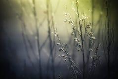 Abstracte aardachtergrond met wild bloemen en installatiessilhouet Stock Fotografie