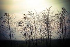Abstracte aardachtergrond met wilde bloemen Stock Fotografie