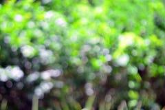 Abstracte aardige achtergrond van vage boom met mooie bokeh Stock Foto