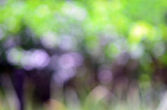 Abstracte aardige achtergrond van vage boom met mooie bokeh Royalty-vrije Stock Afbeelding