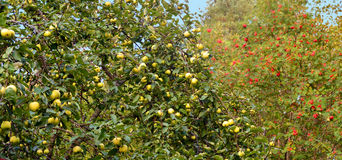 abstracte achtergrond Autumn Fruits Stock Foto's