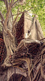 Abstracte achtergrond, boomboomstam, wortel, rood nest Stock Afbeeldingen