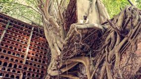 Abstracte achtergrond, boomboomstam, wortel, rood nest Royalty-vrije Stock Foto