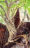 Abstracte achtergrond, boomboomstam, wortel, rood nest Stock Foto