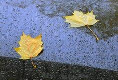 abstracte achtergrond De herfstbladeren en dalingen van een regen op ca Royalty-vrije Stock Foto's