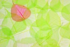 Abstracte achtergrond die van groene en rode bladeren wordt gemaakt royalty-vrije stock fotografie