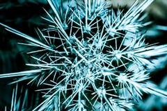 Abstracte achtergrond en textuur van cactusstekels stock fotografie