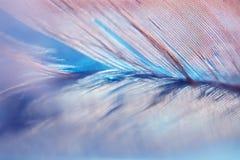 Abstracte achtergrond met blauwe veer en bezinning Selectieve nadruk Stock Afbeelding