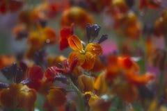 Abstracte achtergrond met geeloranje bloemen Stock Fotografie