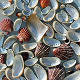 Abstracte achtergrond met overzeese shells Stock Afbeelding