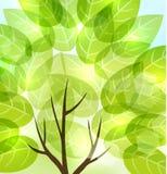 Abstracte achtergrond met transparante bladeren en licht glanzend Th Royalty-vrije Stock Foto