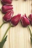 Abstracte achtergrond met tulpen Royalty-vrije Stock Afbeelding