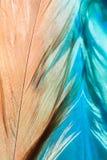 Abstracte achtergrond met veren en bezinning Het mooie modieuze kunstwerk Selectieve nadruk Royalty-vrije Stock Afbeelding