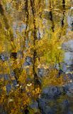 Abstracte achtergrond: op oppervlaktewater met rimpelingen weerspiegelde de donkere boomstammen van bomen met geel de herfstgebla Stock Fotografie