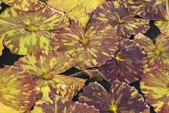 Abstracte Achtergrond: Tropische Lily Pad Mosaic stock afbeelding