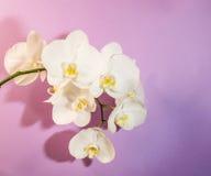 Abstracte Achtergrond van Bloemen Stock Afbeeldingen