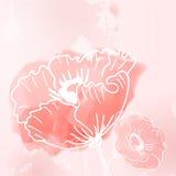 Abstracte achtergrond van bloemenpapavers Royalty-vrije Stock Foto's