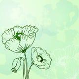 Abstracte achtergrond van bloemenpapavers Stock Fotografie