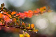 Abstracte achtergrond van de herfstbladeren stock foto's