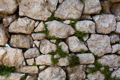 Abstracte achtergrond van de textuur van de steenmuur met groene installatie Stock Foto