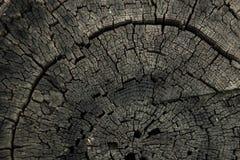 Abstracte achtergrond van droge kastanjeboomstam stock foto's