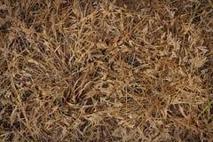 Abstracte achtergrond van droog gras Stock Foto's