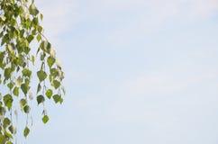 Abstracte achtergrond van een lichtblauwe hemel en hangende takken met groene bladeren Royalty-vrije Stock Afbeeldingen