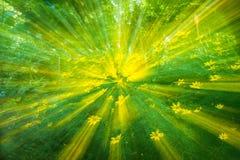 Abstracte Achtergrond van Gele Coreopsis-Bloem in Tuin Royalty-vrije Stock Afbeeldingen