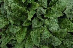 Abstracte achtergrond van groene bladeren Hoogste mening royalty-vrije stock foto
