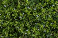 Abstracte achtergrond van groene bladeren met violette bloemen Hoogste mening royalty-vrije stock afbeeldingen