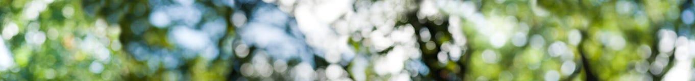 Abstracte achtergrond van groene groente stock afbeeldingen