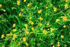 Abstracte achtergrond van groene weide met kleine gele bloesems Stock Afbeelding