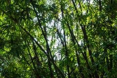 Abstracte achtergrond van het bamboe Stock Afbeeldingen