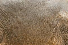 Abstracte achtergrond van het ruwe olifantsleer Royalty-vrije Stock Afbeeldingen