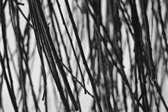 Abstracte achtergrond van laag van tak in zwart-wit Stock Afbeelding