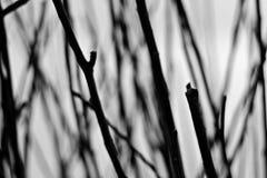 Abstracte achtergrond van laag van tak in zwart-wit Stock Foto