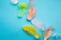 Abstracte achtergrond van reeks multi-colored mooie en zachte vogelveren op blauw royalty-vrije stock foto