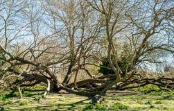 Abstracte achtergrond van tot bloei komende bomen Royalty-vrije Stock Afbeelding