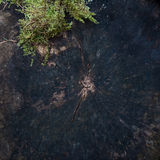 Abstracte achtergrond van verminderd boom en mos Royalty-vrije Stock Foto's