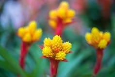 Abstracte achtergrond - Zachte nadruk abstracte bloemen op gebiedsachtergrond Stock Foto