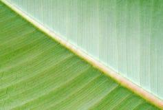 Abstracte bladachtergrond Stock Afbeeldingen