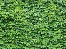 Abstracte bladerenachtergrond Royalty-vrije Stock Afbeelding