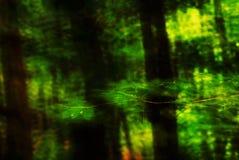 Abstracte bladerenflits stock foto's