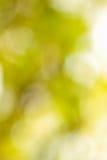 Abstracte bleek - groene vage achtergrond Royalty-vrije Stock Afbeelding