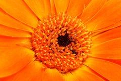 Abstracte bloei oranje achtergrond Royalty-vrije Stock Foto's
