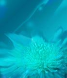 Abstracte bloem Royalty-vrije Stock Foto's