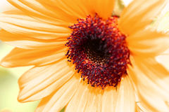 Abstracte bloem Stock Foto